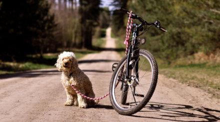Топ-5 лучших поводков для безопасной езды на велосипеде с собакой