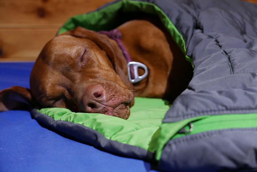 Лучший спальный мешок для собак