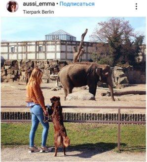 Зоопарк Tierpark