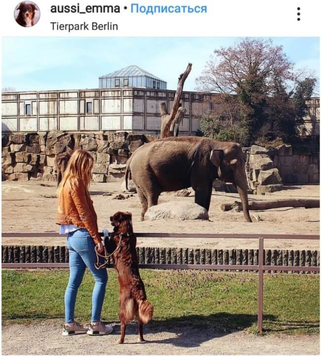Зоопарк Tierpark на Am Tierpark 125, 10319 Berlin (Музеи, экскурсии, зоопарки)