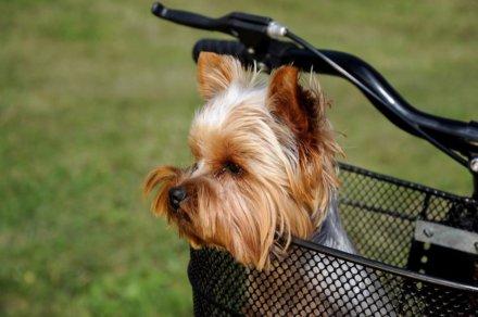 Лучшие корзины для собак на велосипед