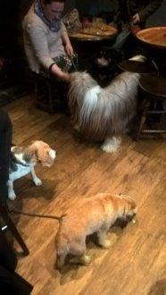 Yorkshire Terrier на 10 Stonegate,  York YO1 8AS (Бары)