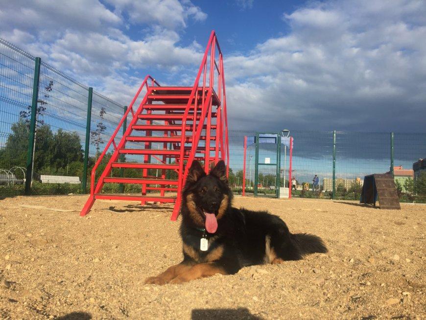 Площадка для собак в Нахабино на ул. Королёва, 13 (Площадки для собак)