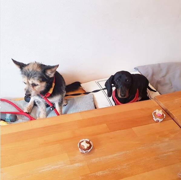 The Long Dog Cafe на 66 Claremont St,  Aberdeen AB10 6QY (Кафе)