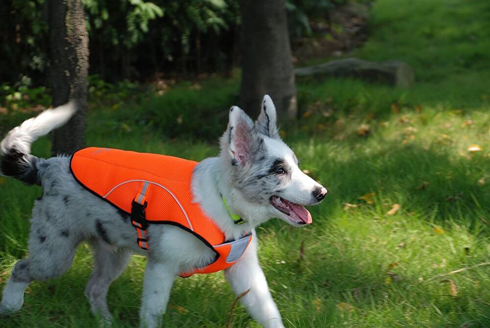 Охлаждающие жилеты для собак в жару