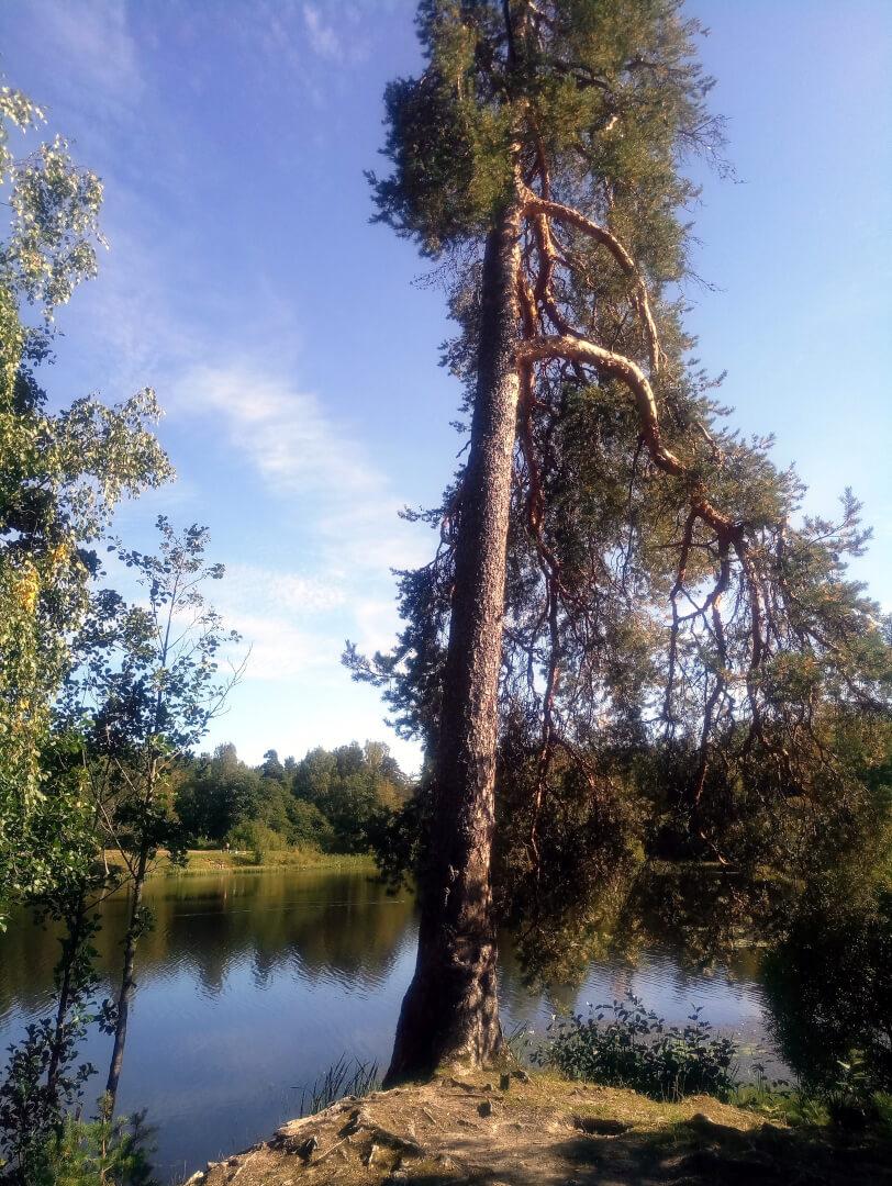 Красный (Верхний) пруд на Россия,  Санкт-Петербург (Озёра и карьеры)
