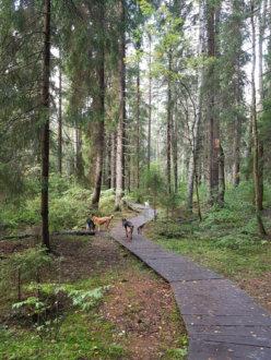 Экологическая тропа в Комарово на Морская ул.,  Комарово (Парки)