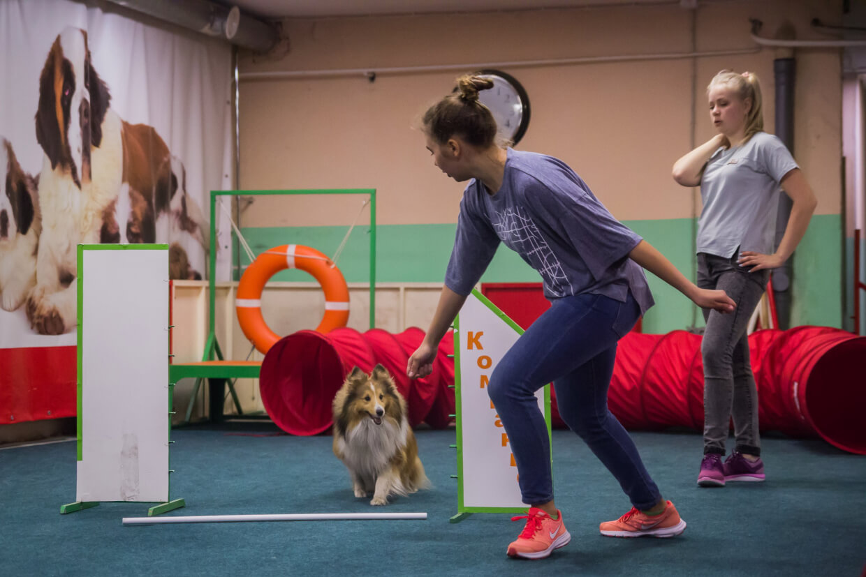 Зооцентр Компаньон на ул. Жуковского,  113,  Новосибирск (Специально для собак)