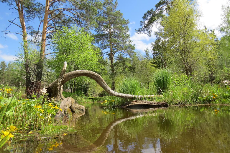 Ботанический сад СО РАН на Золотодолинская ул.,  д. 101 (Парки)