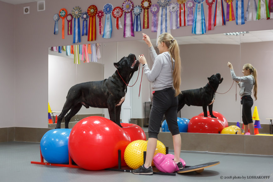 Центр услуг для собак iDog на ул. Мориса Тореза, 14в (Специально для собак)
