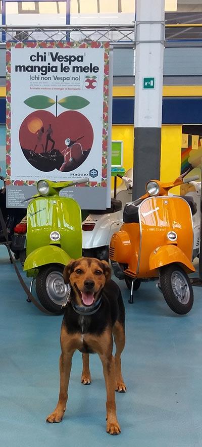 Музей Piaggio на Viale Rinaldo Piaggio (Музеи, экскурсии, зоопарки)