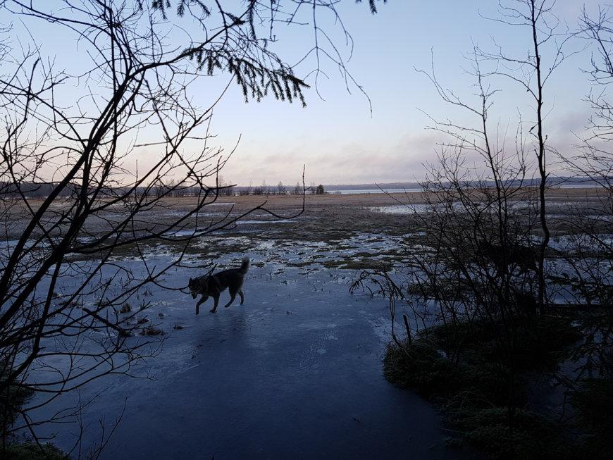 Кавголовское озеро на Дачная ул., 17 (Озёра и карьеры)