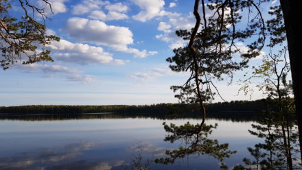 Заходское. Красноперские озера на Ozero Bol'shoye Krasnoperskoye,  Ленинградская обл. (Озёра и карьеры)