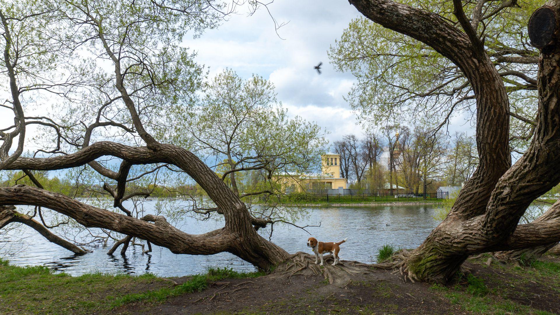 Колонистский на Самсониевская ул.,  7 (Парки)