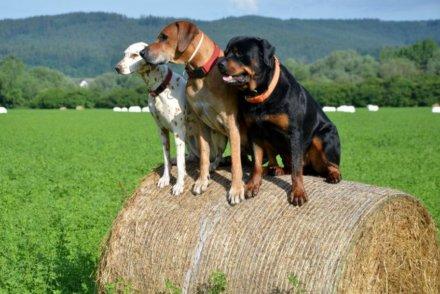 Лучшие GPS ошейники итрекеры для собак 2020
