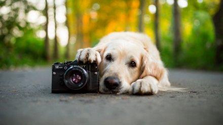 Фото- ивидеокамеры для собак икошек наошейник, икрепление наспину