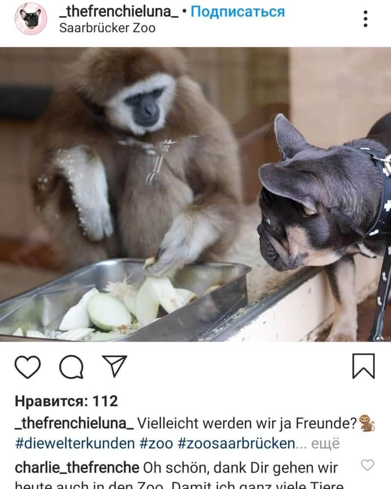 Зоопарк Saarbrücken Zoo на Graf-Stauffenberg-Straße 1,  66121 Saarbrücken,  Германия (Музеи, экскурсии, зоопарки)