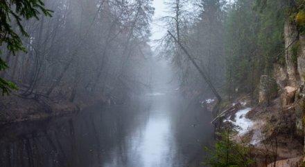 Белые скалы на реке Ящера на Ленинградская обл., Россия (Достопримечательности)