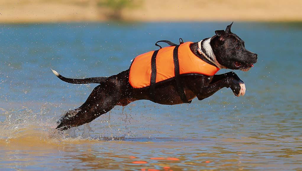 Лучшие водные спасательные жилеты для собак