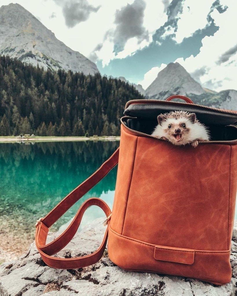 Путешествие ежика Херби