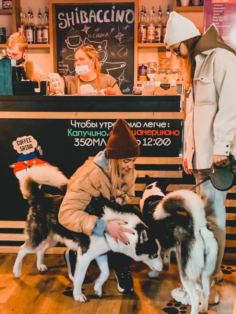 кафе Coffee Shiba в Челябинске с собакой