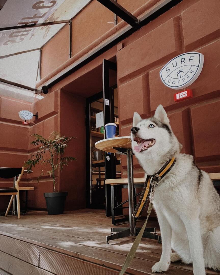 Surf Coffee на ул. Комсомольская,  10 (Кафе)
