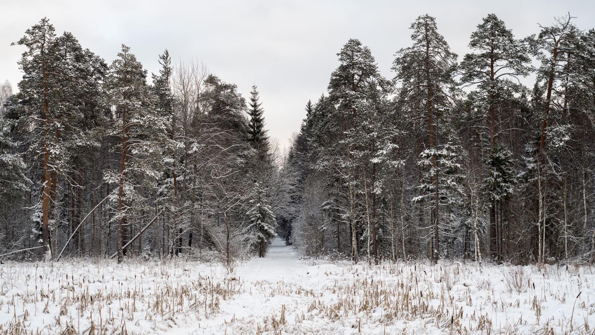 Зверинец на Unnamed Road,  Ленинградская обл. (Парки)