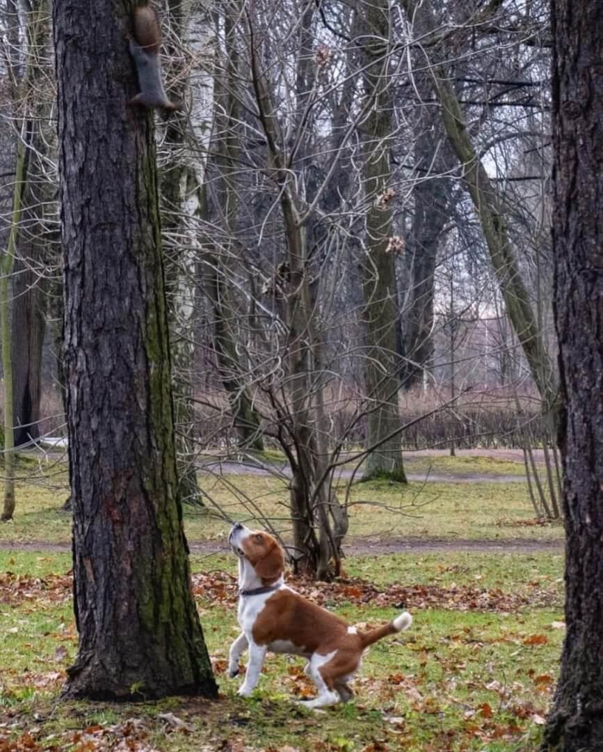 Приморский парк Победы на Метро Крестовский остров,  Санкт-Петербург (Парки)