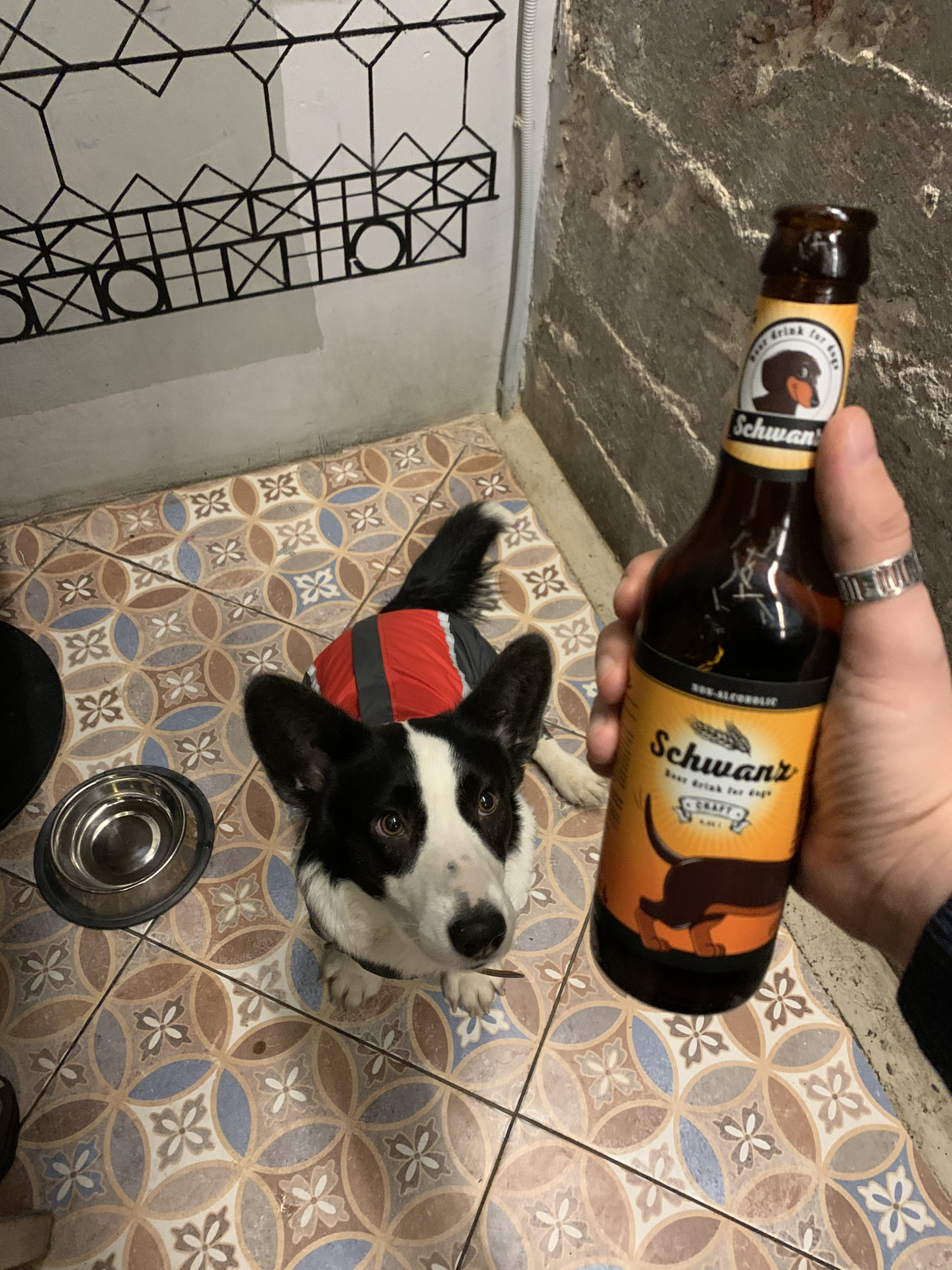 DOGS. на ул. Некрасова,  23 (Кафе)