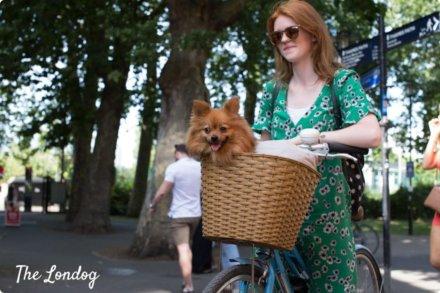 Как можно ездить с собакой на велосипеде