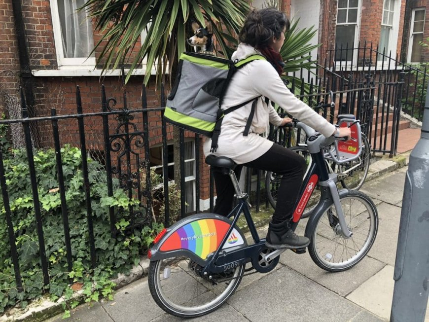 Рюкзак-переноска для собак для езды на велосипеде