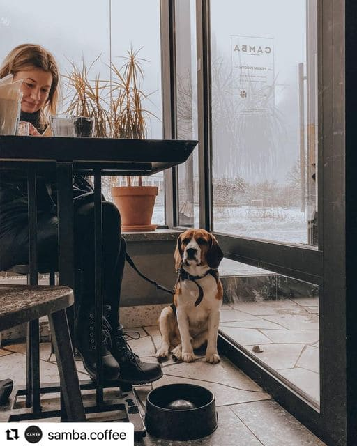 Самба на 137,  корп (Кафе)