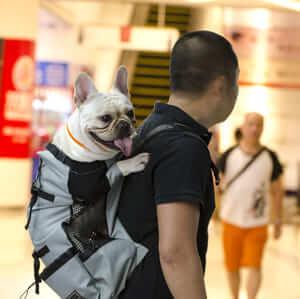 Дышащий рюкзак-переноска для собак, разные размеры