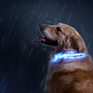 Светодиодный ошейник для собак с защитой от дождя