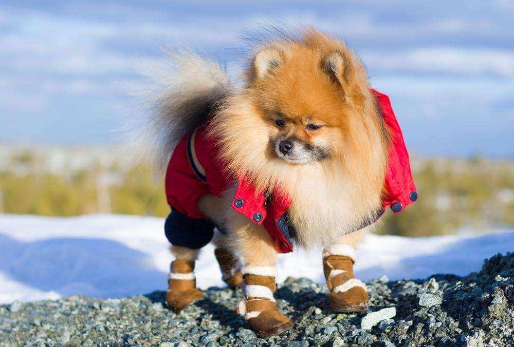 Выбор лучшей обуви для собак