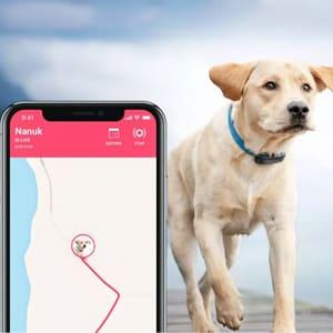 GPS-ошейники и трекеры для отслеживания питомца