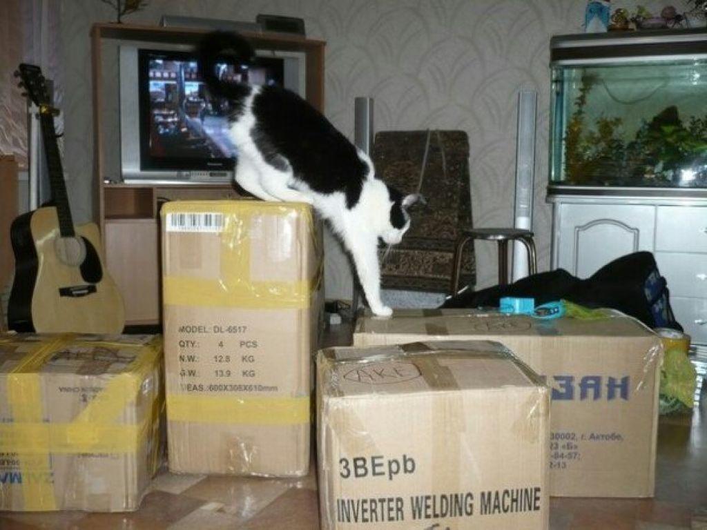 Кот собирает вещи в поездку на поезде